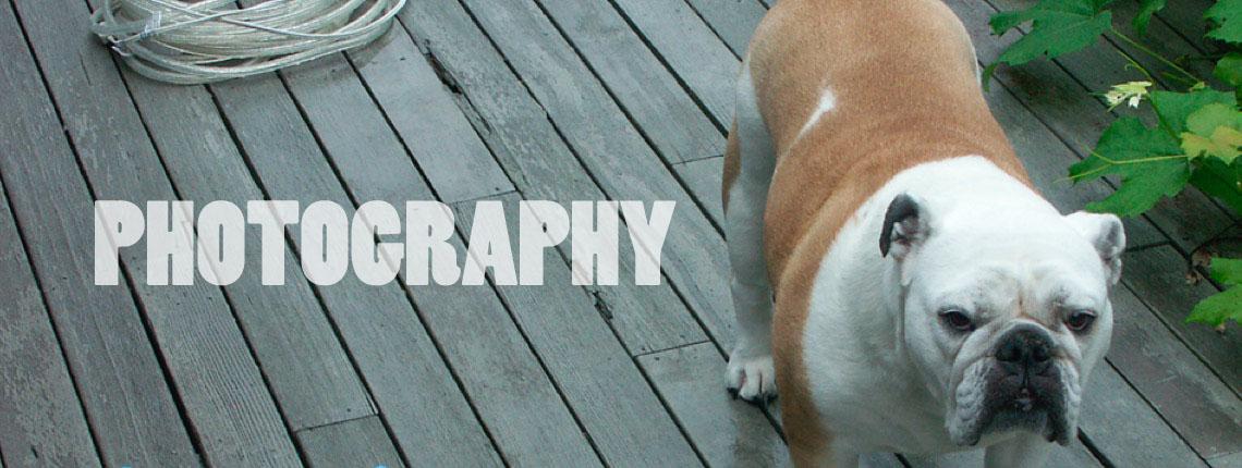 Photography for business, events & entertainment portfolios.